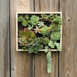 succulent wall garden: Plants Hangers, Idea, Succulents Wall, Succulents Gardens, Wallmount Succulents, Gardens Container, Wall Mount Succulents, Wall Gardens, Hanging Gardens