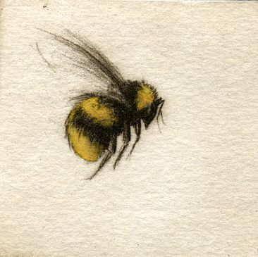 Watercolor bee. Torn about pinning this because though the technique is beautiful, I'm terrified of bees an looking at this freaks me out a bit. But it's so beautifully rendered I can't help but love it. And hate it at the same time lol