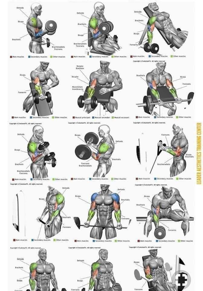 Упражнения группы мышц картинках