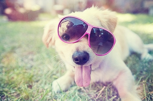 Puppy! #dog #puppy #glasses #haha