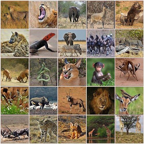 Wildlife resultaat