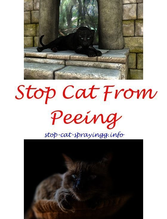 Cat Animals Spray To Stop Cats On Furniture Cleaning With Bleach Ing Out Of Clothes Anti Citrus Natural Chemistry