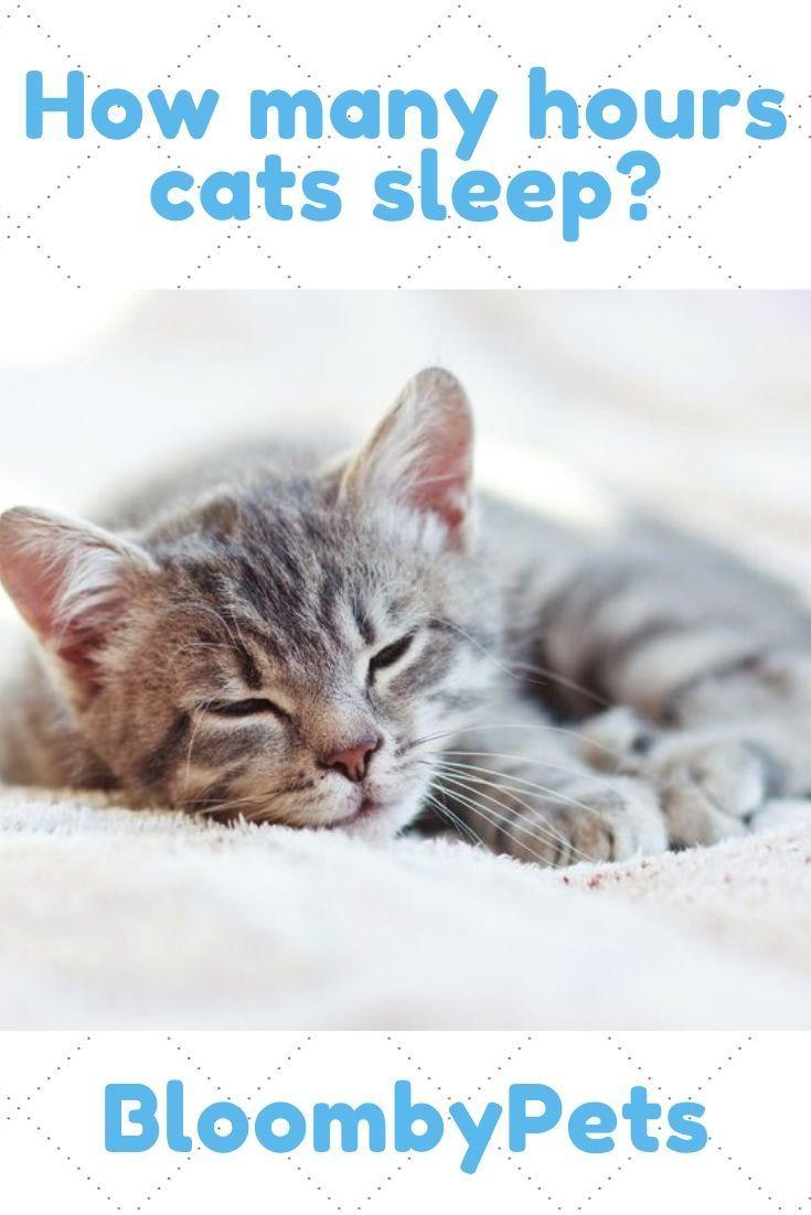 How Many Hours Cat Sleeps Bloombypets Cat Sleeping Cats Sleeping Kitten