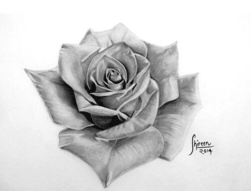 Realistic rose sketch done by shireen khan Instagram @artistsk