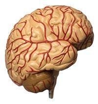 secrets adhd brain