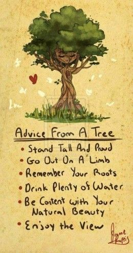 Advice from a Tree Words to live by.