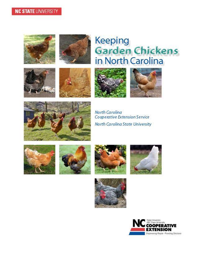Keeping Garden Chickens in North Carolina | NCSU