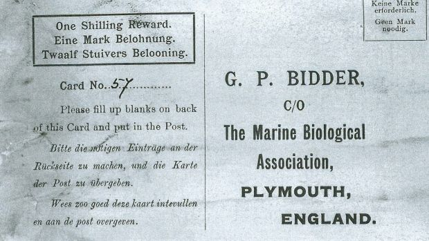 LONDON -- A century-old message in a bottle, possibly the oldest ever found, has finally reached its destination.  Tossed into the North Sea sometime between 1904 and 1906, the bottle washed up on the beach on the German island of Amrum, and was found by a couple in April. Inside they found a postcard asking that it be sent to the Marine Biological Association of the U.K. -- which they did. Con't in comments...