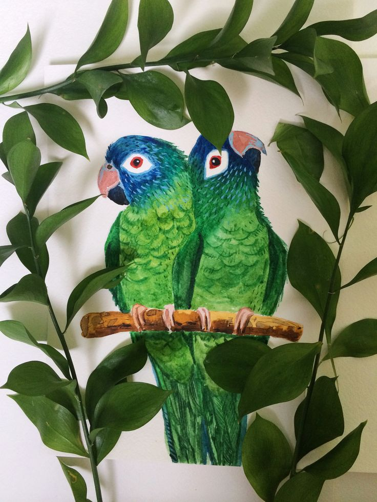 Watercolor parrots