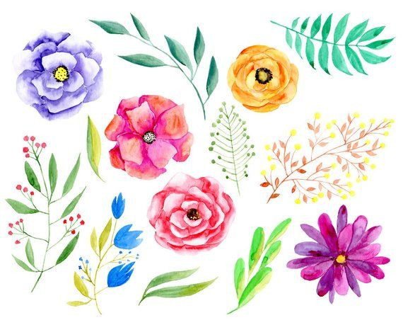 Watercolor Floral Clipart Bright Flowers Leaves Branches