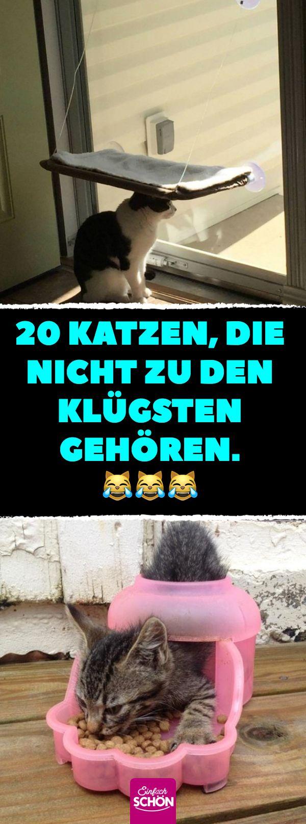 20 Katzen, die nicht zu den Klügsten gehören. #katze #katzen #klug #fail #lustig #bilder – Melek Weyor
