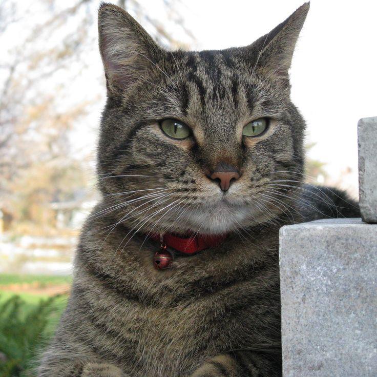 Handsome Casimir