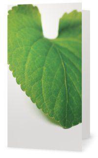 Viola Leaf, Violblad. Cards for florists. Gift card for flower arrangements. Scandinavian design. Jäderberg & Co.