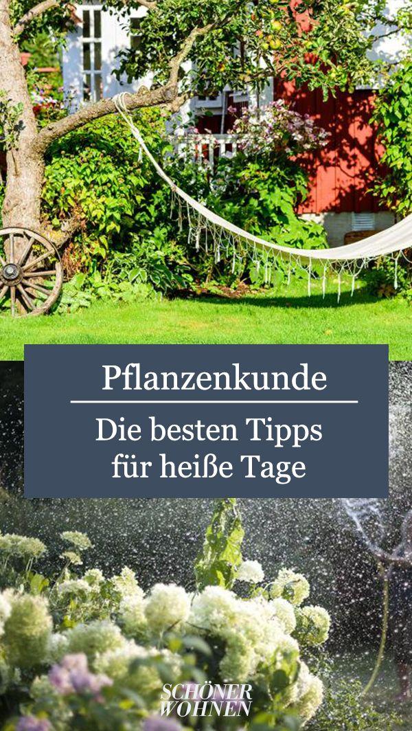 Morgens Oder Abends Giessen Bild 4 Pflanzen Garten Balkon Pflanzen