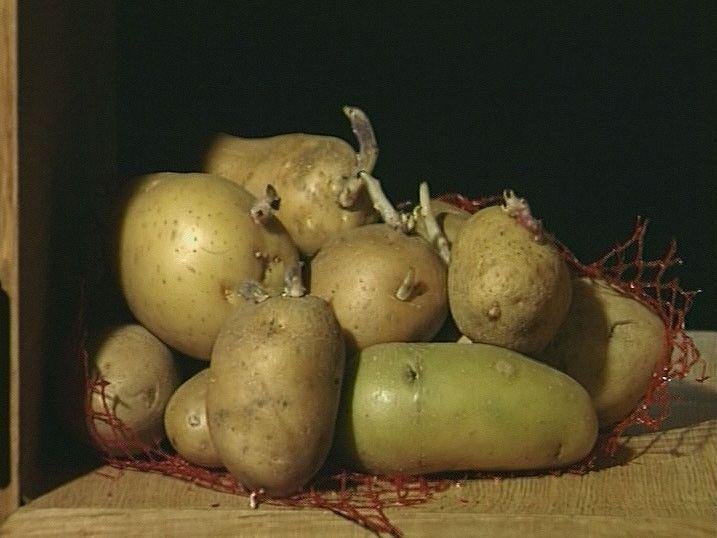 bij les 3; schooltv (1.50min) Hoe groeit de aardappel?