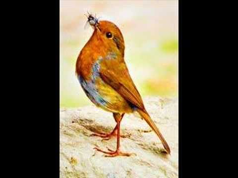 Wrex Tarr - Cocky Robin - YouTube