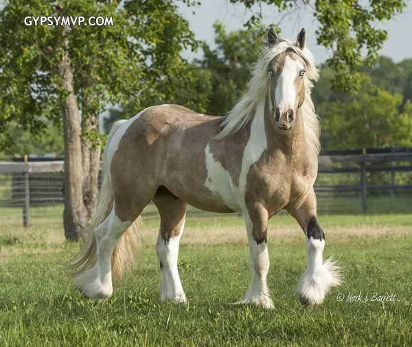 stallion and gelding relationship