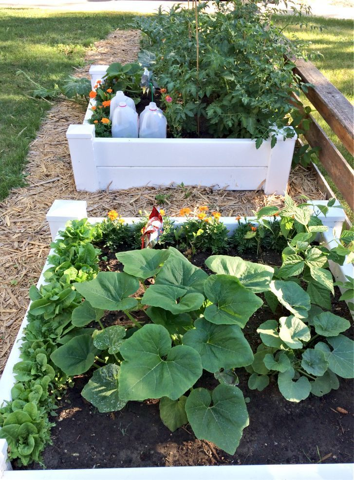 How To Design A Front Yard Raised Bed Vegetable Garden Vegetable