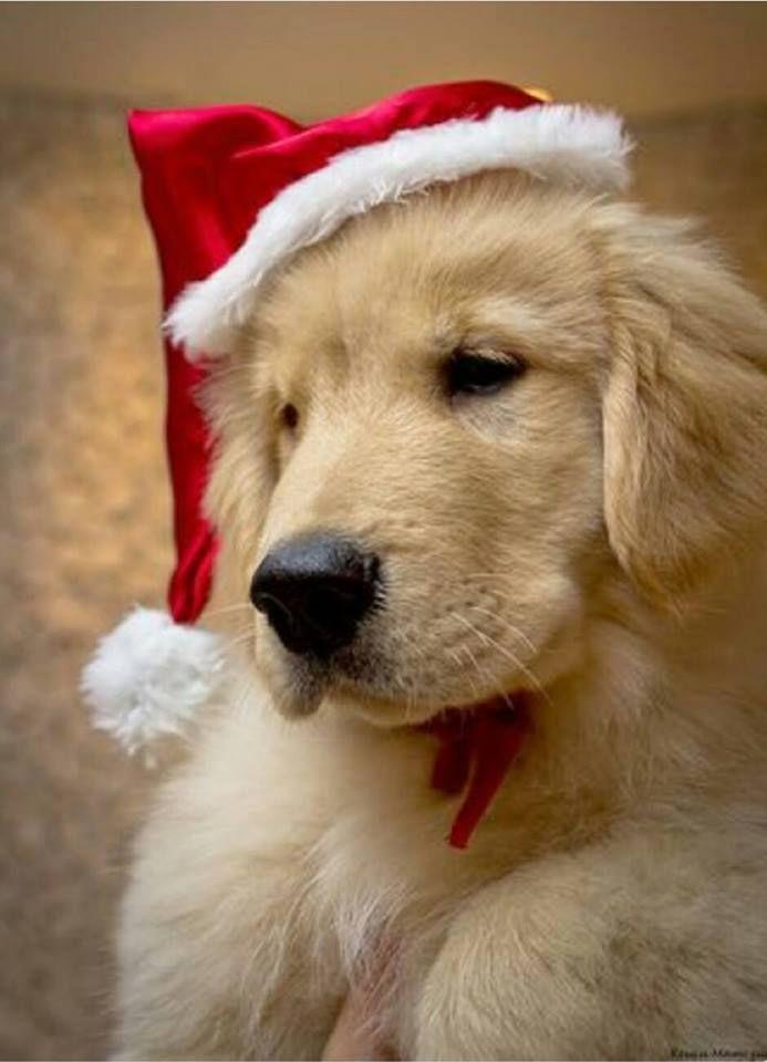 Dog House Plans For Golden Retrievers