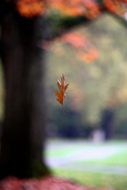 Falling Leaf. Simple and beautiful reminder that autumn is here!