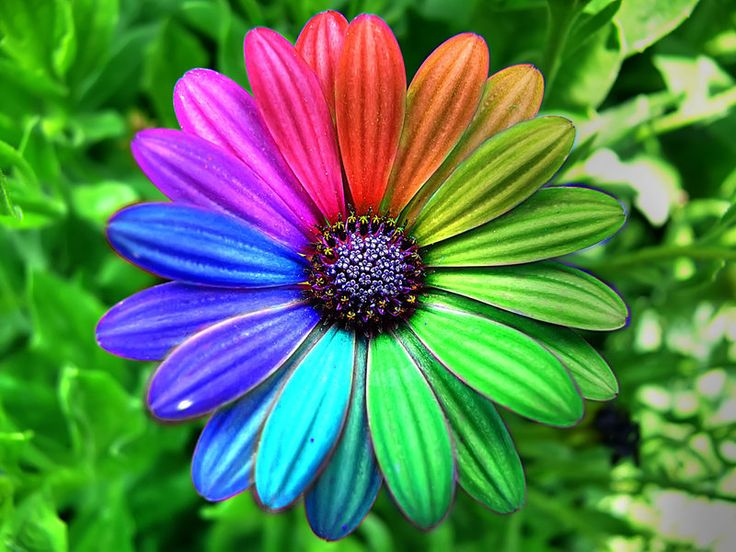 colorful flowers - Google Search | Hippie pictures ...