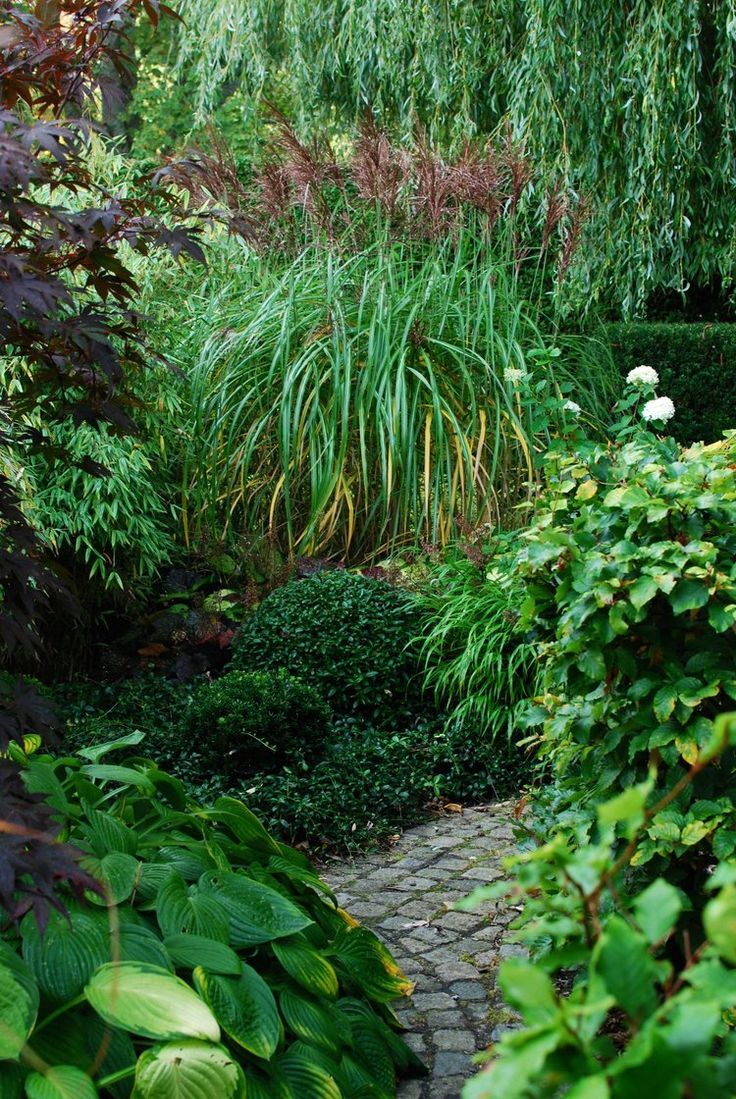 Best 25 miscanthus malepartus ideas on pinterest for Border grasses for landscaping