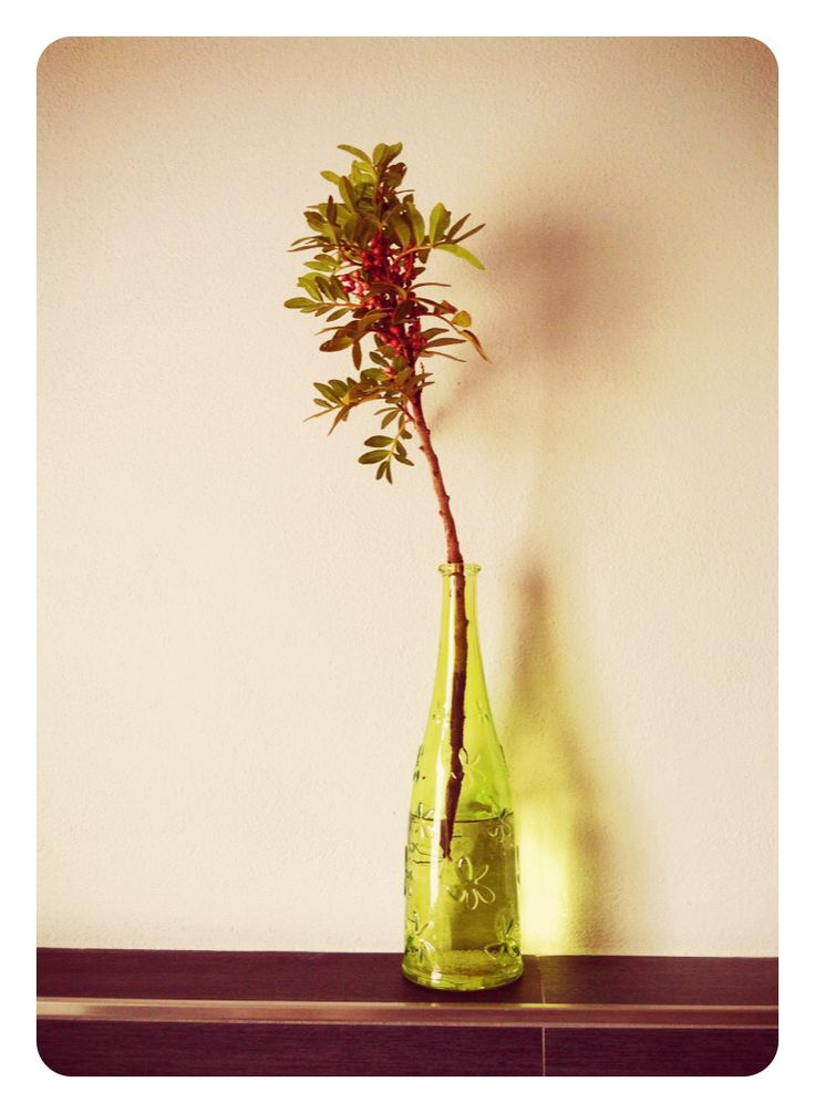 In the bottle // tipo #ikebana