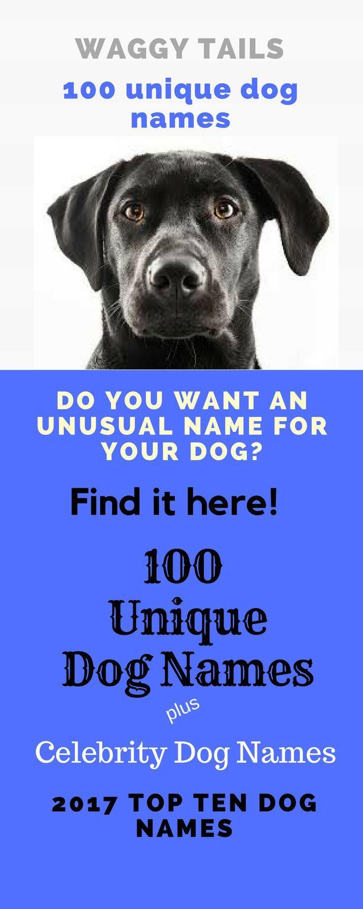 100 Unique Dog Names Celebrity Dog Names Most Popular Dog Names Dognames Uniquedognames Unusualdognames Populardognames How To Choos Dog Names Popular Dog Names Unusual Dog Names