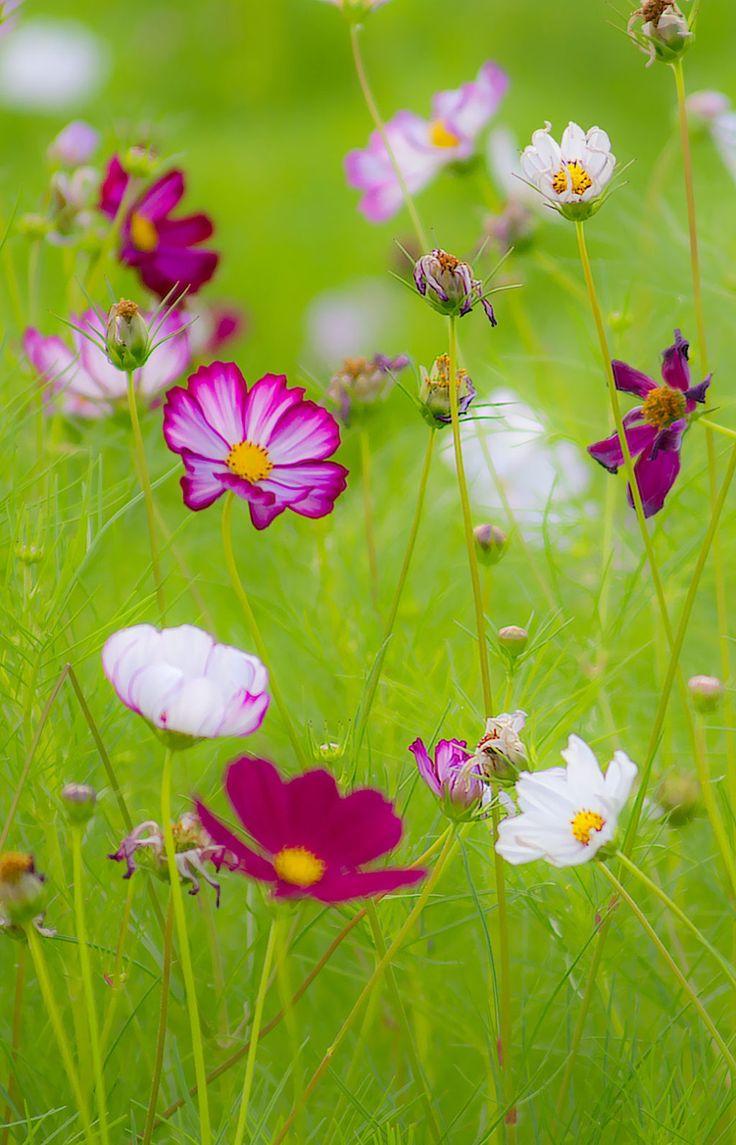 best Garden images on Pinterest Swings Decks and Hammocks