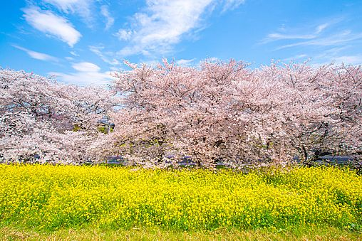 昭和記念公園の魅力やおすすめポイント10選|cuta [キュータ]