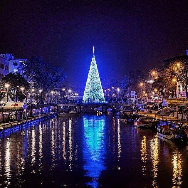 L'albero di Natale di #Riccione