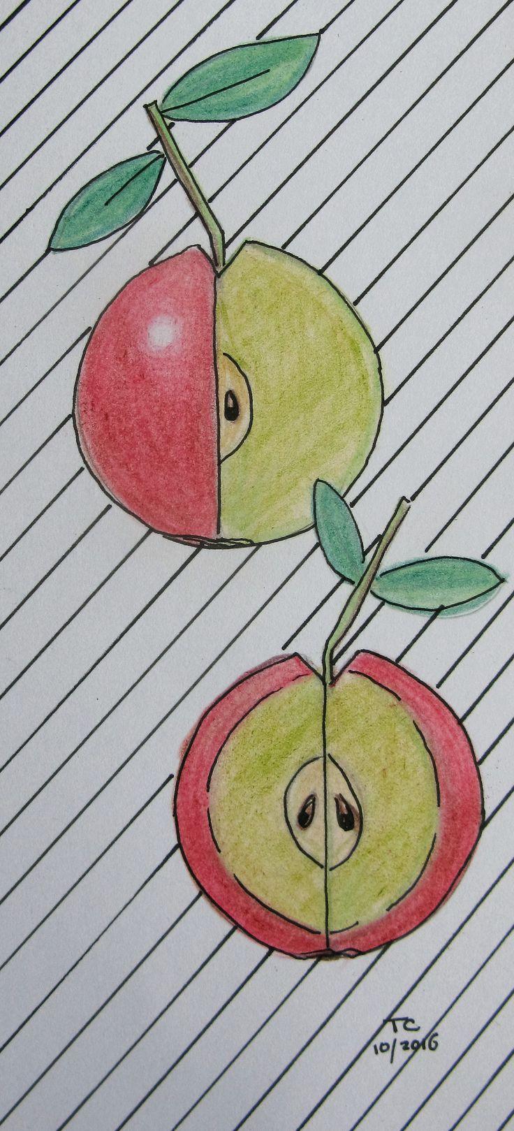 Food illustratie appels kleurpotlood gemaakt door Tonny Cooyman