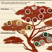 Interactive Human Evolution Tree