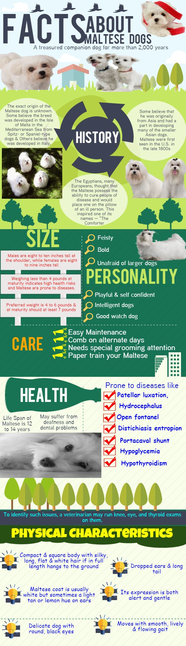 Take a look at this info-graphics to know the details about Maltese Dogs. Everything about this Dog breed you will get to know including size, personality and average life span. The Physical characteristics of Maltese dogs are also available in this info-graphics. You can also able to know about the possible diseases in Maltese dogs and how to care your Maltese dog. More