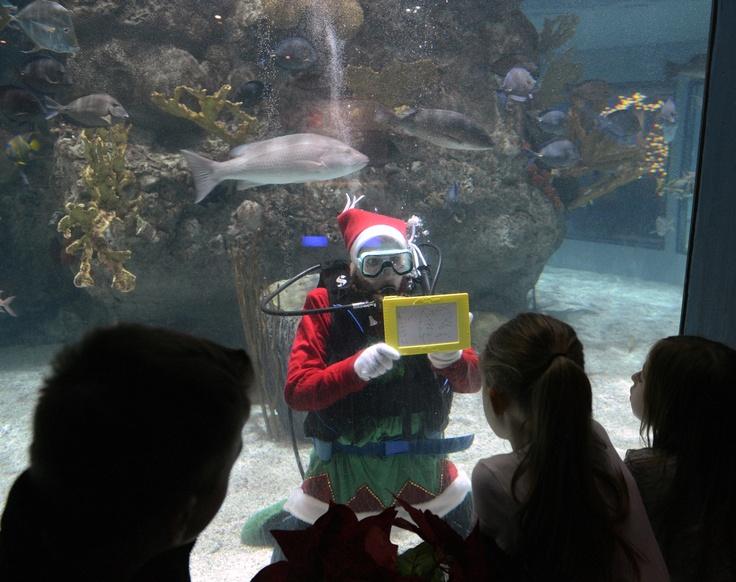 49 Best Images About Mystic Aquarium Mystic Ct On