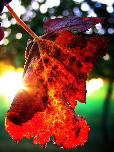 Autumn afternoon in the vineyard...