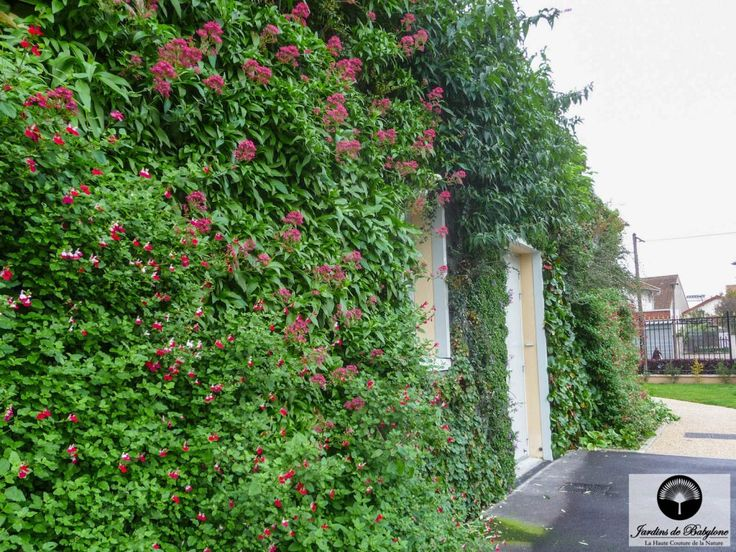 Mur de façade végétalisée : biodiversité urbaine - Jardins de Babylone
