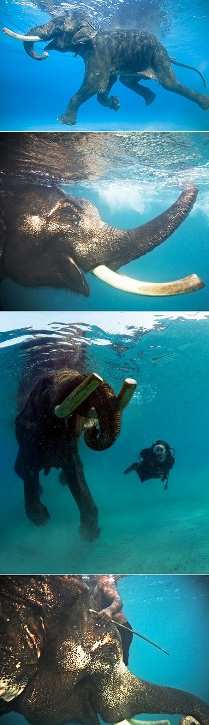 Swimming with an Elephant in India