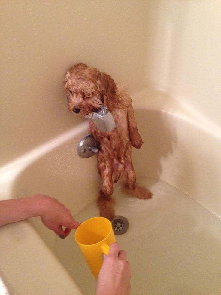 Doggy takes a bath