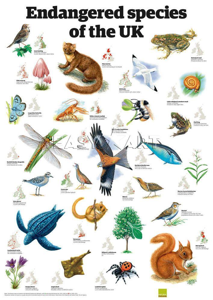 Endangered species of the UK, Guardian Wallchart Prints from Easyart.com