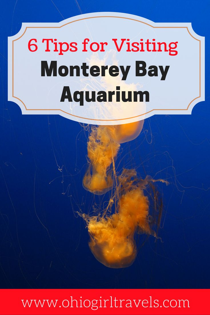 The Monterey Bay Aquarium in California isn't your average aquarium. This aquarium sits on the ocean offering ways to see wildlife in the aquarium and in the ocean itself. Here are 6 tips for making the most of your experience at the Monterey Bay Aquarium, California.