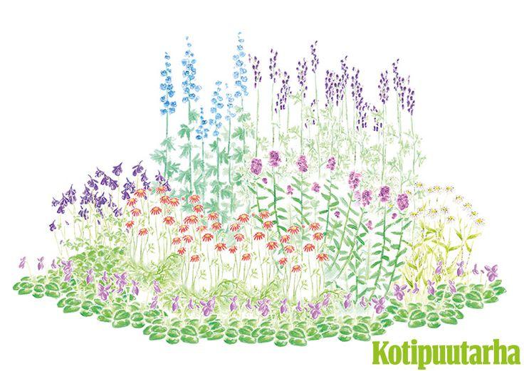 KUKKIA FREDERIKAN TAPAAN. Istutus on saanut inspiraationsa Fredrika Runebergin puutarhasta Porvoossa. 1800-luvulla perustetusta kirjailijakodista löytyy maamme parhaiten säilynyt historiallinen kaupunkipuutarha. Istutuksen kasvit: Isoritarinkannus (Delphinium elatum), päivänkakkara (Leucanthemum vulgare), punapietaryrtti (Tanacetum coccineum), syysleimu (Phlox paniculata), lehtoakileija (Aquilegia vulgaris), tuoksuorvokki (Viola odorata), aitoukonhattu (Aconitum napellus subsp. lusitanicum)