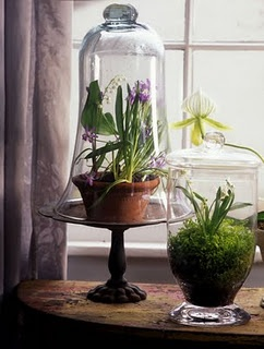 indoor plant, cake pedastal, glass cloche, spring flowers, and moss ... terrarium