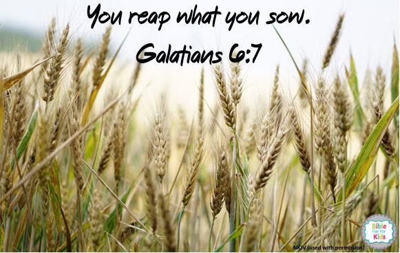 You Reap What Sow Bible Quote Scripture Quotes App Where Verse Are Paraphrased