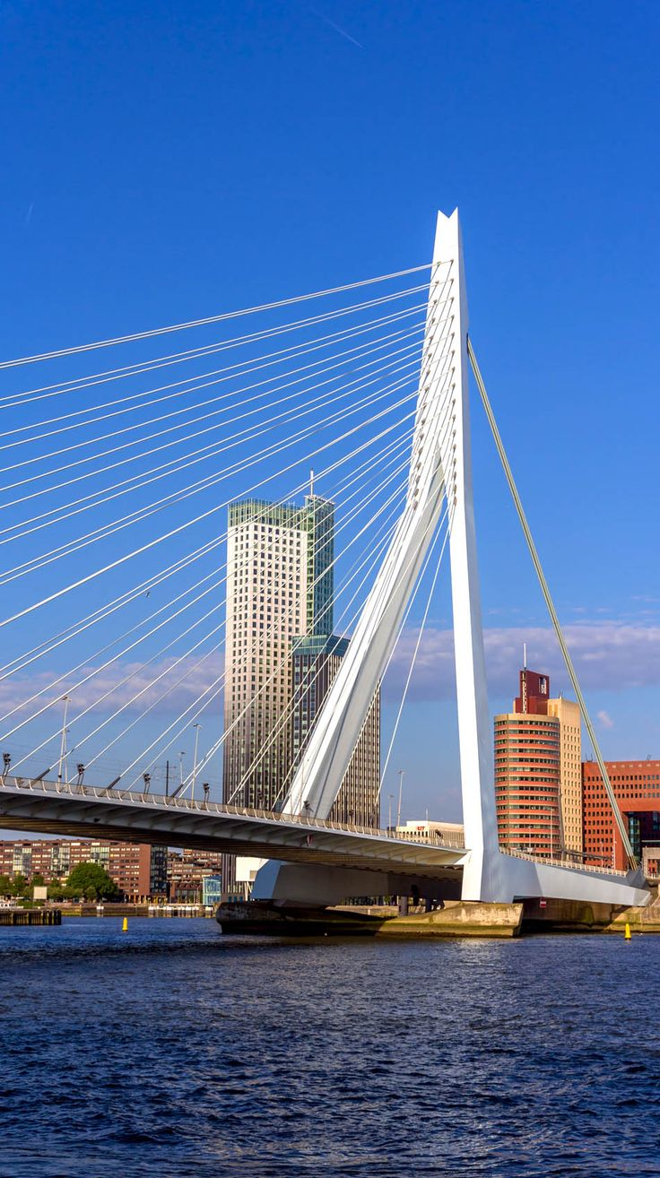 View of Erasmus Bridge in Rotterdam, Netherlands | 13 Reasons Why The Netherlands Must Be On Your Bucket List