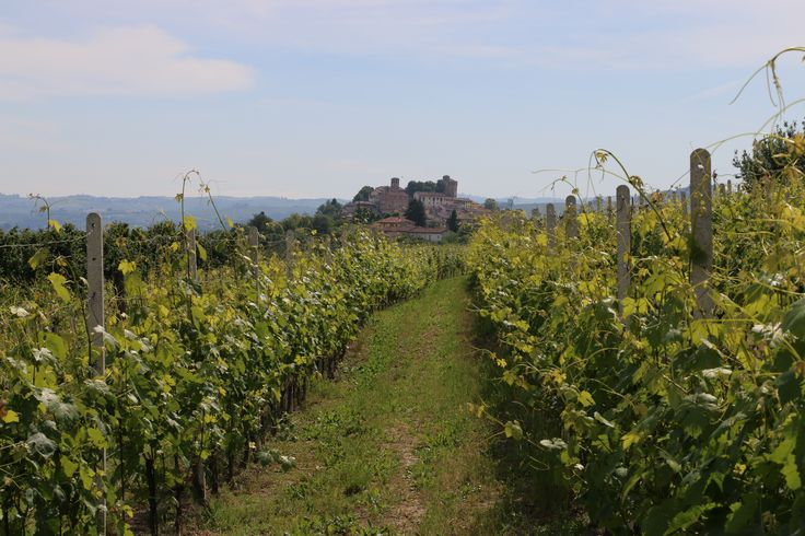 Up in the hills amongst the beautiful castles of Piemonte, Northern Italy