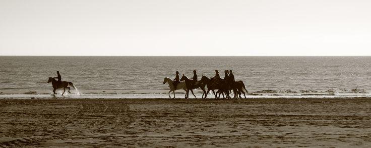 Cavalli sulla spiaggia di Lignano Sabbiadoro (UD - Italia)