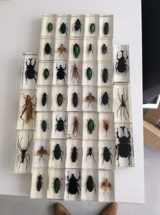 Online veilinghuis Catawiki: 41 - echte insecten - in kunsthars gegoten
