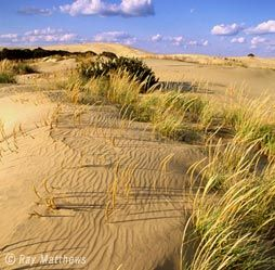 Jockey's Ridge State Park - Nags Head, NC: Jockeys Ridge, Banks Nc, Favorite Places, State Parks, State Park Love, Fav Places, Outerbanks, U.S. States