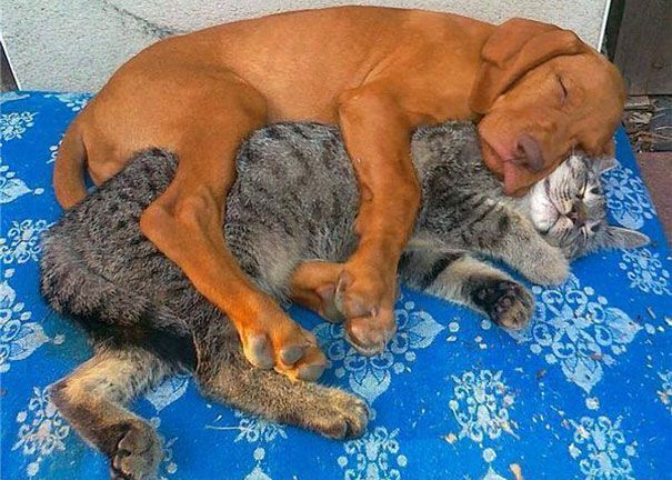 Puppy and kitty nestled together like two puzzle pieces.